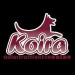Koira - Entrenamiento canino