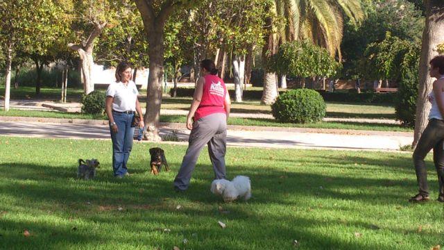 Koira - Entrenamiento canino - 2